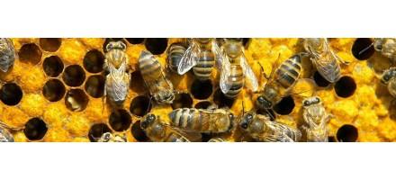Μελισσοκομικοί Χειρισμοί
